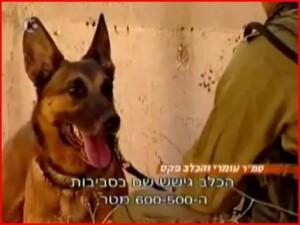 Jednotka Oketz – psí bojovníci